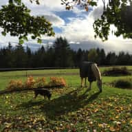 3 horses, 2 dogs and a beautiful home in the Pacific Northwest