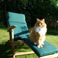 OAP cat looking for a sitter