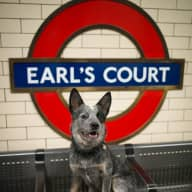 Dogs life in London (Facebook)