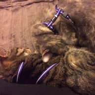 Trustworthy housesitter(s) wanted for 2 lovely felines