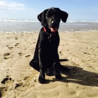 House sitter needed for Woody