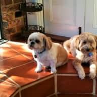 Loving carer/s needed for Lulu & Pippa in Fremantle, WA