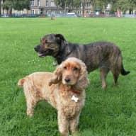 Summer 2016 with 2 loving dogs during the Edinburgh Fringe Festival