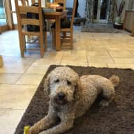 Pet/House Sitter Needed for a Lovely Farmhouse in N.Wales