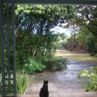 House sitter for Wattle Cottage, Norfolk Island