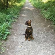 To look after our beloved dog Brenin the Dobermann