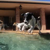 Pet sitter needed for 2 dogs in Redlands QLD area