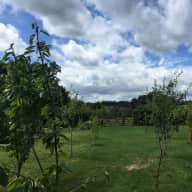 Animal and house sitter in beautiful countryside