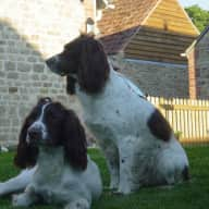 House & pet sitter(s) required for 16 days in August
