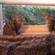 Ruudi & Quince - 2 Queen's Park cats - London NW6