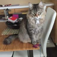 Calgary, Regal Park NE - House and cat sitter wanted