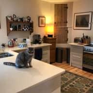 Cat sitting in Lymington