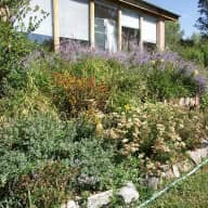 House and pet sitter(s) needed in Taos  New Mexico