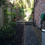 Petsitter needed for 3 lovely cats in very nice house with garden in Oxford