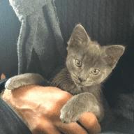 Miku the kitten needs company this Christmas