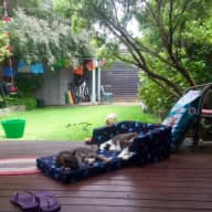 Looking for care and company for 2 lovely cats, for two weeks in Sydney