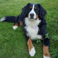 Pet sitter needed in a picturesque village outside of Bath