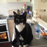 Cat sitter needed for 1 week in June