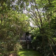 Peaceful jungle hideaway in the middle of Bangkok with a sweet, easy Labradoodle