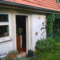 Seeking Cat and House Sitter in Southern Germany