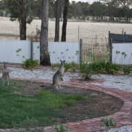 Quiet haven in Victorian Goldfields requires sitter for 2 weeks in late Sept. 2013