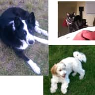Non-Smoking Pet Sitter Needed in Boise, Idaho for 3 weeks in April 2015 (2 dogs 1 cat)