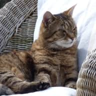 Pet sitter needed for my 2 cats for a fortnight