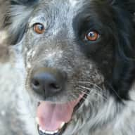 Dogsitter Needed in South Lake Tahoe October 24-29