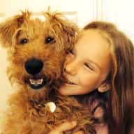 Irish Terrier needs love and walks!
