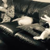 Loving & Patient Pet Sitter Needed