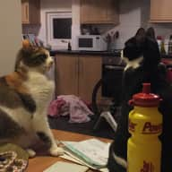 Help needed to look after three one year old kittens whilst we are away!