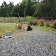 Pet sitter needed - variable dates - in beautiful Ardennes, Belgium