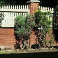 2 friendly cats to look after in North Perth