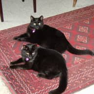 Sitter needed for 2 cats in Jerez, Spain for approximately 3 weeks