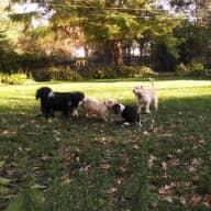 Dog Lovers Dream! Six Happy, Fun Loving Pups
