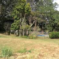 House sitter for cat and property plus pool