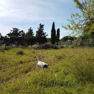 Dog sitter required in Spain in August