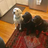 In home dog sitter needed