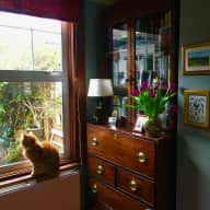 Kind cat sitter needed at my North London home