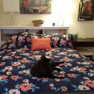 It's hot, it's humid - but the museums are free and there's so much to do!  Stay in my Cozy Studio with 2 Black Cats, Balcony Overlooks Rock Creek Park, Near 2 Metro Stops, Buses, and Shops