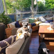 House and pet sitter required