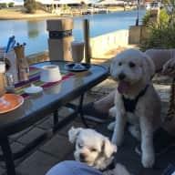 Pet/house sit in coastal WA