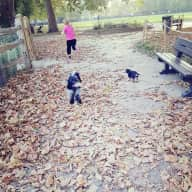 Dog sitters needed in West London