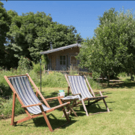 Easygoing Lurcher, Whippet and two cats looking for a housesitting friend for an August fortnight in idyllic South Devon