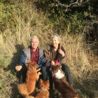 Aussie and two small dogs need dog loving sitter