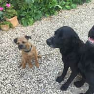 House and Pet sitter needed for 3 friendly dogs, 2 black labs and 1 border terrier. near bristol