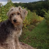 Pet care and house sitting on our vineyard