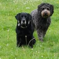 Two Loving dogs request your company in their comfortable house nestled on the foot of the Cotswolds