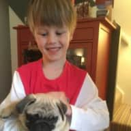 Loving, kind person to stay and look after our pug puppy