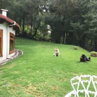 Lovely house close to Desierto de los Leones National Park, 4 dogs and 2 cats, Mexico City